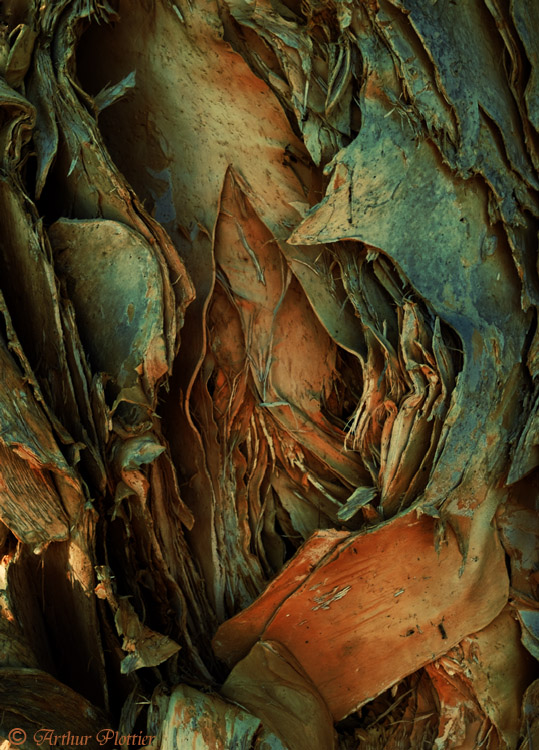 Expressions on Paperbark